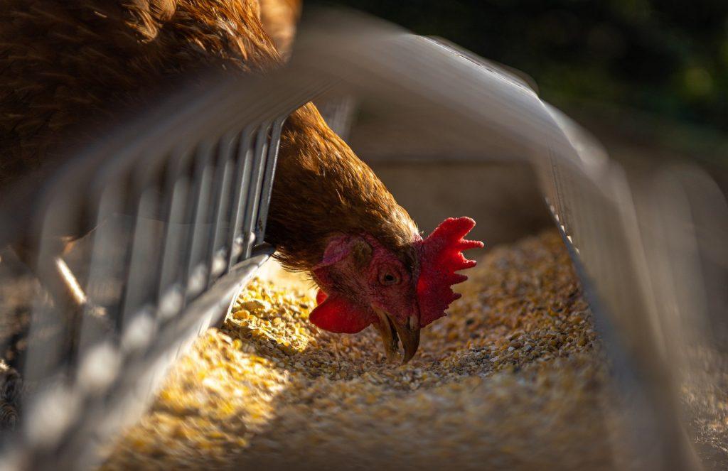Largest Animal Feed Companies