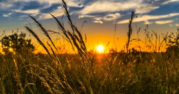 Top 5 Agricultural Technology Stocks for 2021
